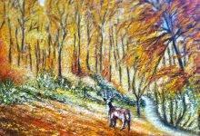Le cerf en forêt d'Eawy